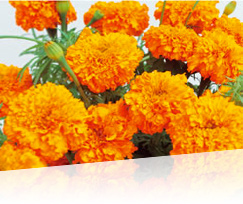http://www.super-lutein.net/export/sites/superlutein/vi/vn/images/quality/image-01.jpg