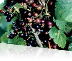 http://www.super-lutein.net/export/sites/superlutein/vi/vn/images/quality/image-02.jpg